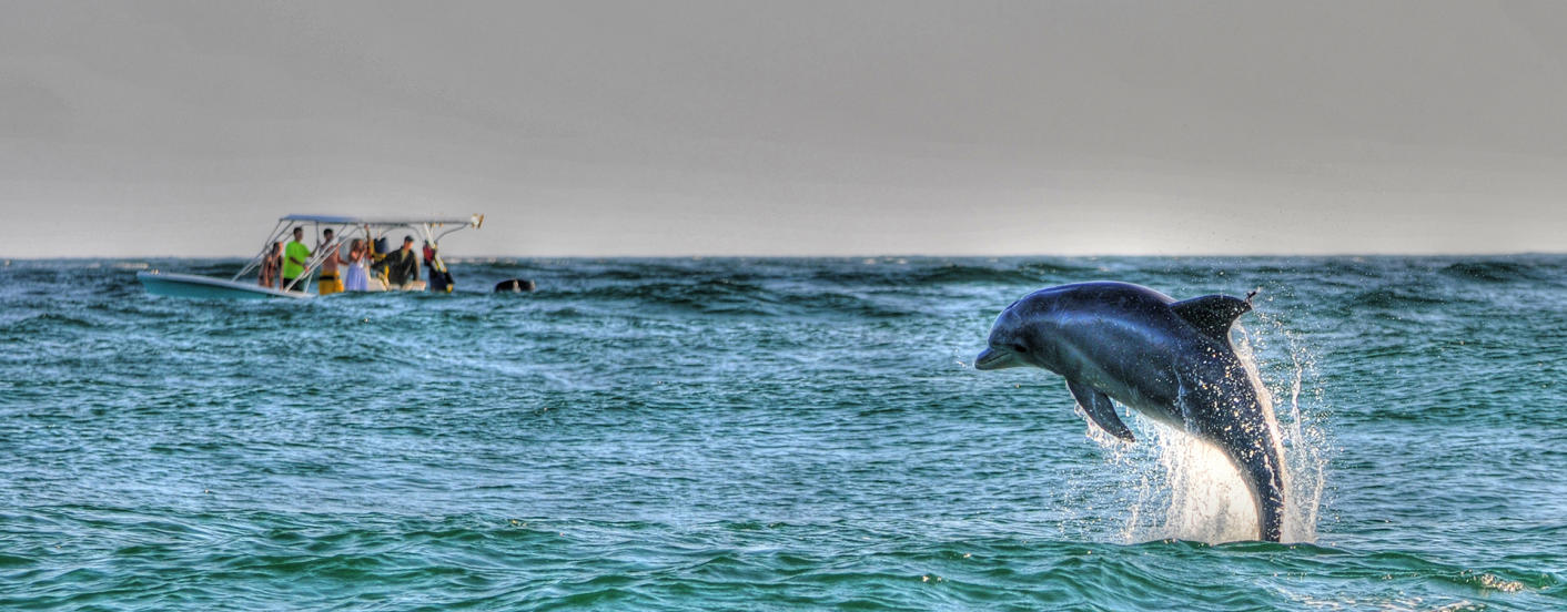 boat on the water with dolphin